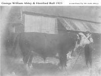 GW Abley & Bull